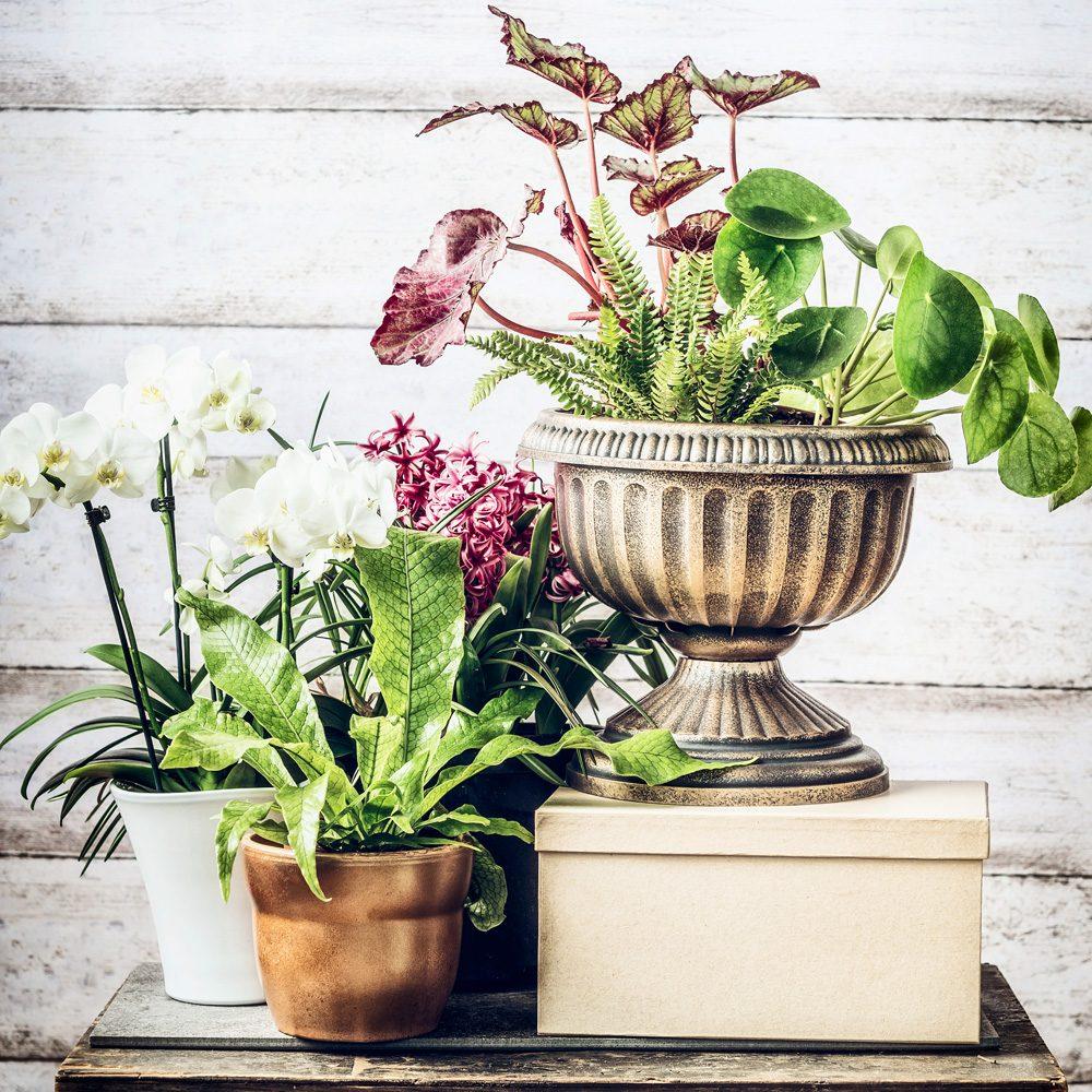 Garden Claudia - Vivaio a Falconara Marittima (An)